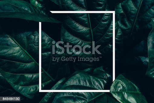 istock Creative layout made of green leaves. Flat lay. Nature concept 845484130