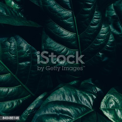 istock Creative layout made of green leaves. Flat lay. Nature concept 845485148