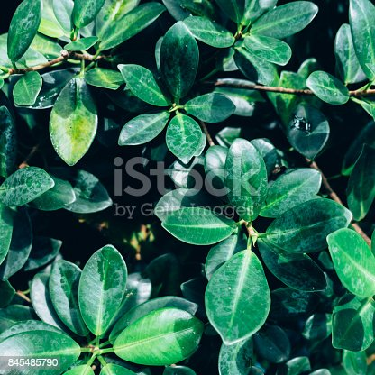 istock Creative layout made of green leaves. Flat lay. Nature concept 845485790