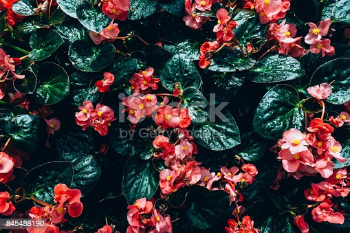 istock Creative layout made of green leaves. Flat lay. Nature concept 845486190