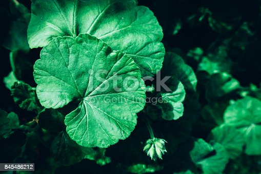 istock Creative layout made of green leaves. Flat lay. Nature concept 845486212