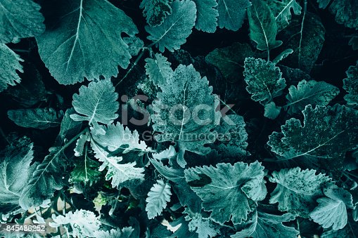 istock Creative layout made of green leaves. Flat lay. Nature concept 845486252