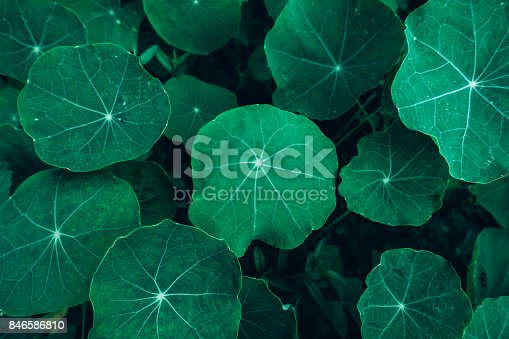 istock Creative layout made of green leaves. Flat lay. Nature concept 846586810
