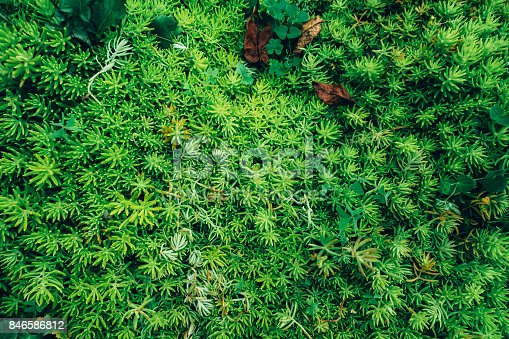 istock Creative layout made of green leaves. Flat lay. Nature concept 846586812