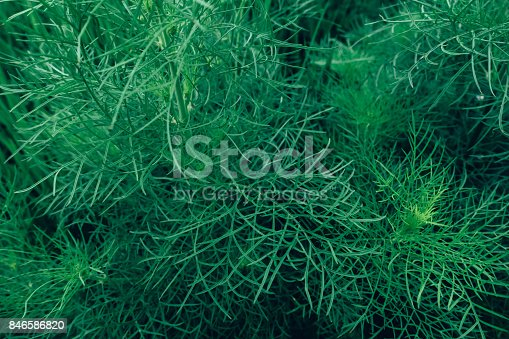 istock Creative layout made of green leaves. Flat lay. Nature concept 846586820