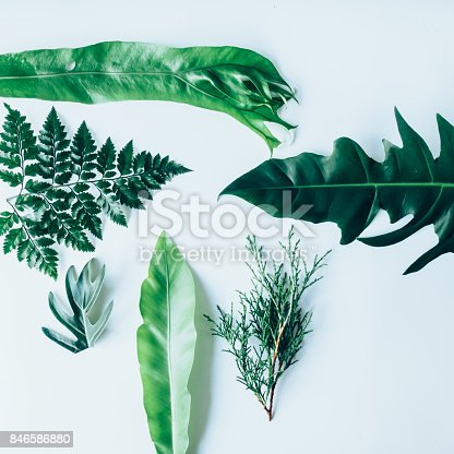 istock Creative layout made of green leaves. Flat lay. Nature concept 846586880
