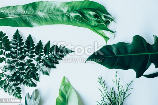 istock Creative layout made of green leaves. Flat lay. Nature concept 846586888