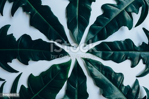 istock Creative layout made of green leaves. Flat lay. Nature concept 846586928