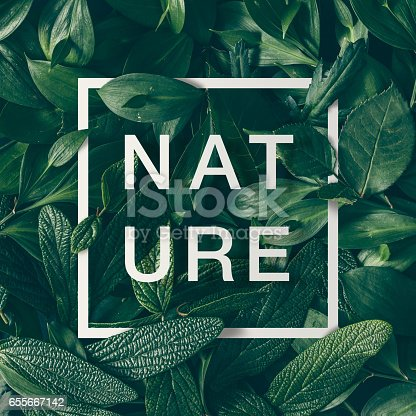 655667160 istock photo Creative layout made of green leaves with paper card border and word nature. Flat lay. Nature concept 655667142