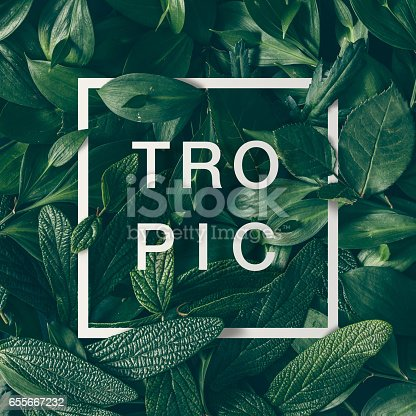 655667160 istock photo Creative layout made of green leaves with paper card border and word tropic. Flat lay. Nature concept 655667232