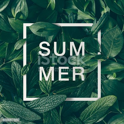 655667160 istock photo Creative layout made of green leaves with paper card border and word summer. Flat lay. Nature concept 655667550