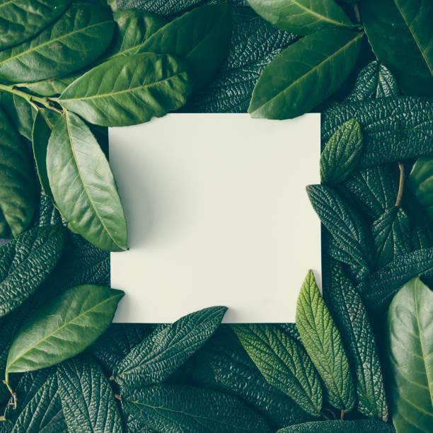 création mise en page faite de feuilles vertes avec note de carte de papier. poser de plat. concept nature - végétation verdoyante photos et images de collection