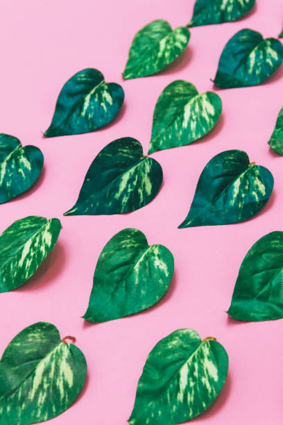 Creative layout made of leaves on pink background. Flat lay. Nature concept