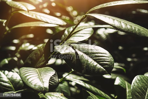 istock Creative layout made of leaves with paper. Flat lay. Nature concept 1154754494