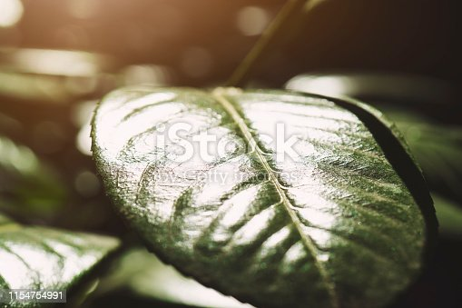 istock Creative layout made of leaves with paper. Flat lay. Nature concept 1154754991