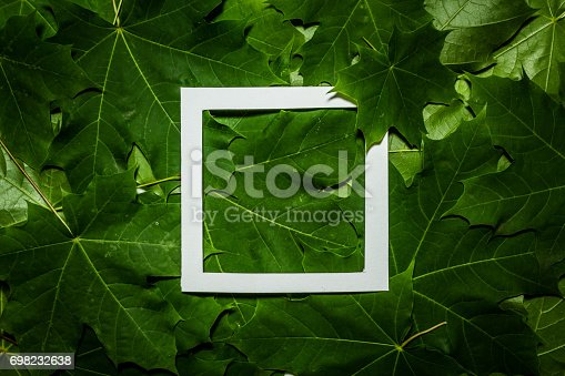 655667398 istock photo Creative layout made of maple tree green leaves. Flat lay. Nature background 698232638