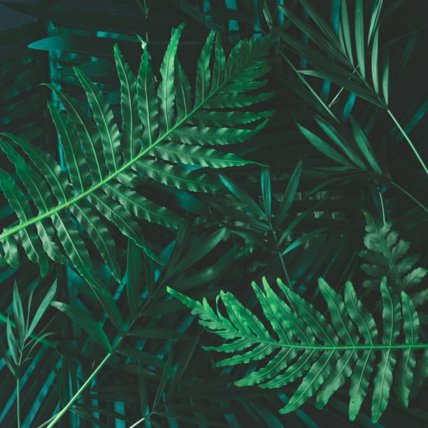 kreative layout gemacht von tropischen blüten und blättern. flach zu legen. natur-konzept - blumendrucktapete stock-fotos und bilder