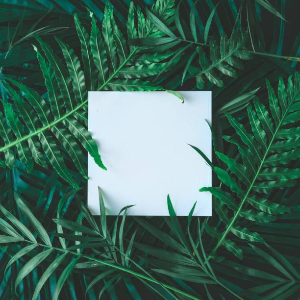 kreative layout von tropischen blumen und blätter mit papier karte hinweis gemacht. flach zu legen. natur-konzept - blumendrucktapete stock-fotos und bilder