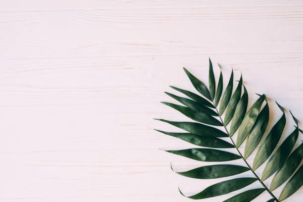 kreative layout gemacht von tropischen palmen blätter auf pastell rosa hintergrund, ansicht von oben flach legen - tropfenblatt tisch stock-fotos und bilder