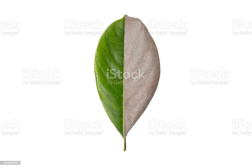 Creative layout of dry leaves. stock photo