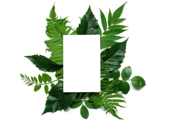 mise en page créative avec fleurs violettes, les feuilles et les carte de voeux blanc blanc - motif tropical photos et images de collection