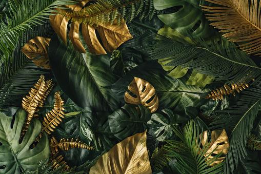創造的な自然の背景金と緑の熱帯ヤシの葉 - アイデアのストックフォトや画像を多数ご用意