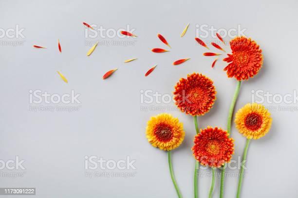 Creative nature composition of beautiful yellow and orange gerbera picture id1173091222?b=1&k=6&m=1173091222&s=612x612&h=rgptvhbpqydtqw uxiv3bdozgvx4puhqg8lzaujl4b4=