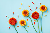 istock Creative nature composition of beautiful yellow and orange gerbera flowers with petals on blue background. Autumn concept. Flat lay. 1173091398