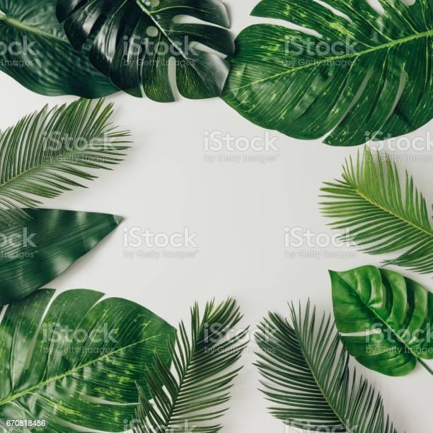 Creative nature layout made of tropical leaves and flowers flat lay picture id670818486?b=1&k=6&m=670818486&s=612x612&h=zw lliekka8jzscyrohodxwloofleiaqwcjqe9i3h q=