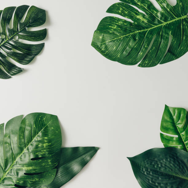 creative nature layout made of tropical leaves and flowers. flat lay. summer concept. - tropical leaves stock photos and pictures