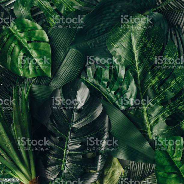 Creative nature layout made of tropical leaves and flowers flat lay picture id670819138?b=1&k=6&m=670819138&s=612x612&h=ftgtynzbccm5jepny2xq5a9tp0stmgw6m7wikew5zx0=