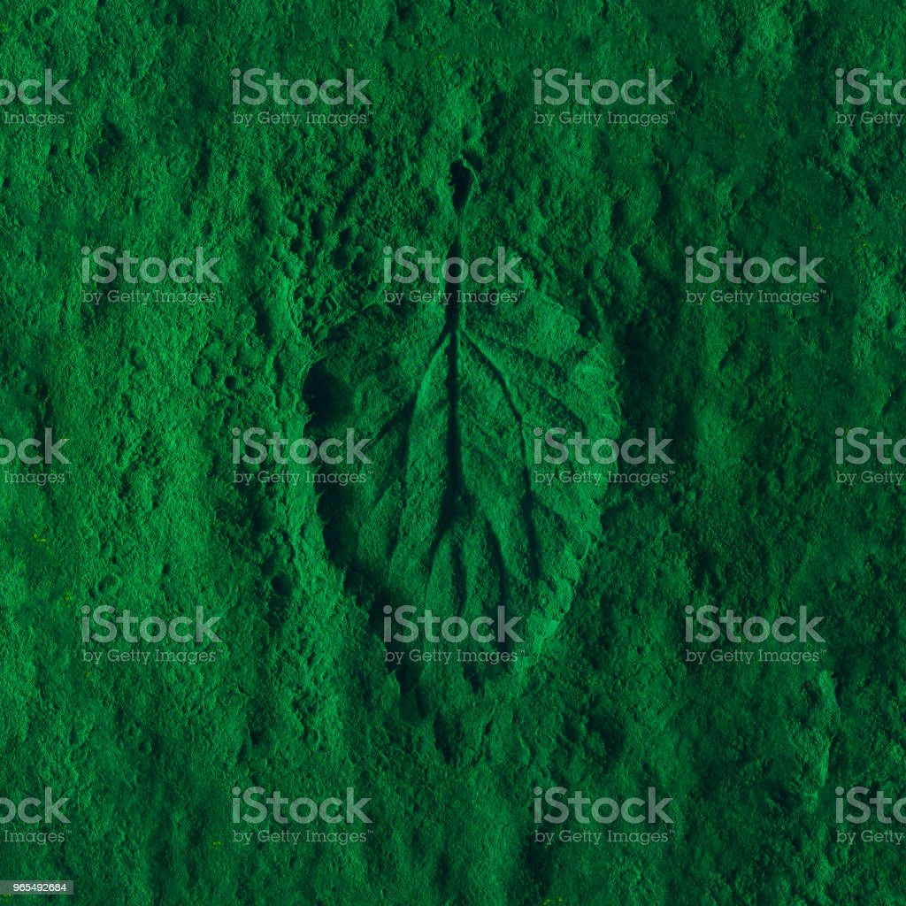 Creative nettle leaf layout with green powder. Minimal nature...