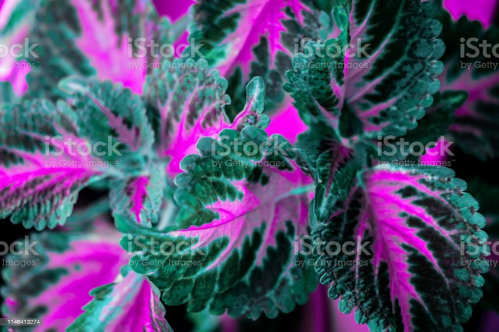 Decorative nettle leaves background nature concept. View from above,...