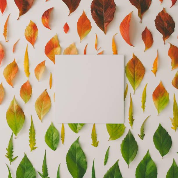 creative pattern of colorful autumn or fall leaves. flat lay, top view. - four seasons zdjęcia i obrazy z banku zdjęć