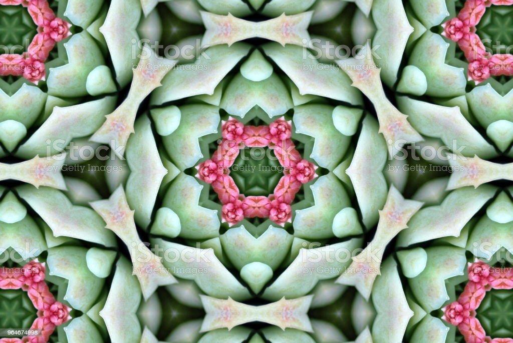 Creative Succulent Inspired Mandalas royalty-free stock photo