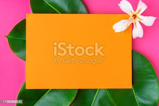 istock Creative trendy tropical summer spa wellness organic cosmetics fashion background. Orange frame on fresh wet ficus leaves white exotic flower on fuchsia pink backdrop. Copy space for text 1158389540
