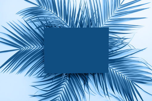 istock Creative tropical Classic blue background with leaves layout, nature spring concept. Flat lay. 1192049909