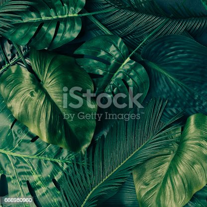 istock Creative tropical green leaves layout. Nature spring concept. Flat lay. 666980960