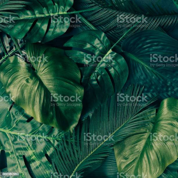 Creative tropical green leaves layout nature spring concept flat lay picture id666980960?b=1&k=6&m=666980960&s=612x612&h= zbei1whcs4iw0inilamhrua9 w9meaeje4cjbytpi8=