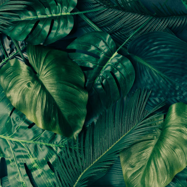 Creative tropical green leaves layout. Nature spring concept. Flat lay. stock photo