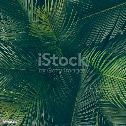 666980960 istock photo Creative tropical green leaves layout. Nature spring concept. Flat lay. 666983372