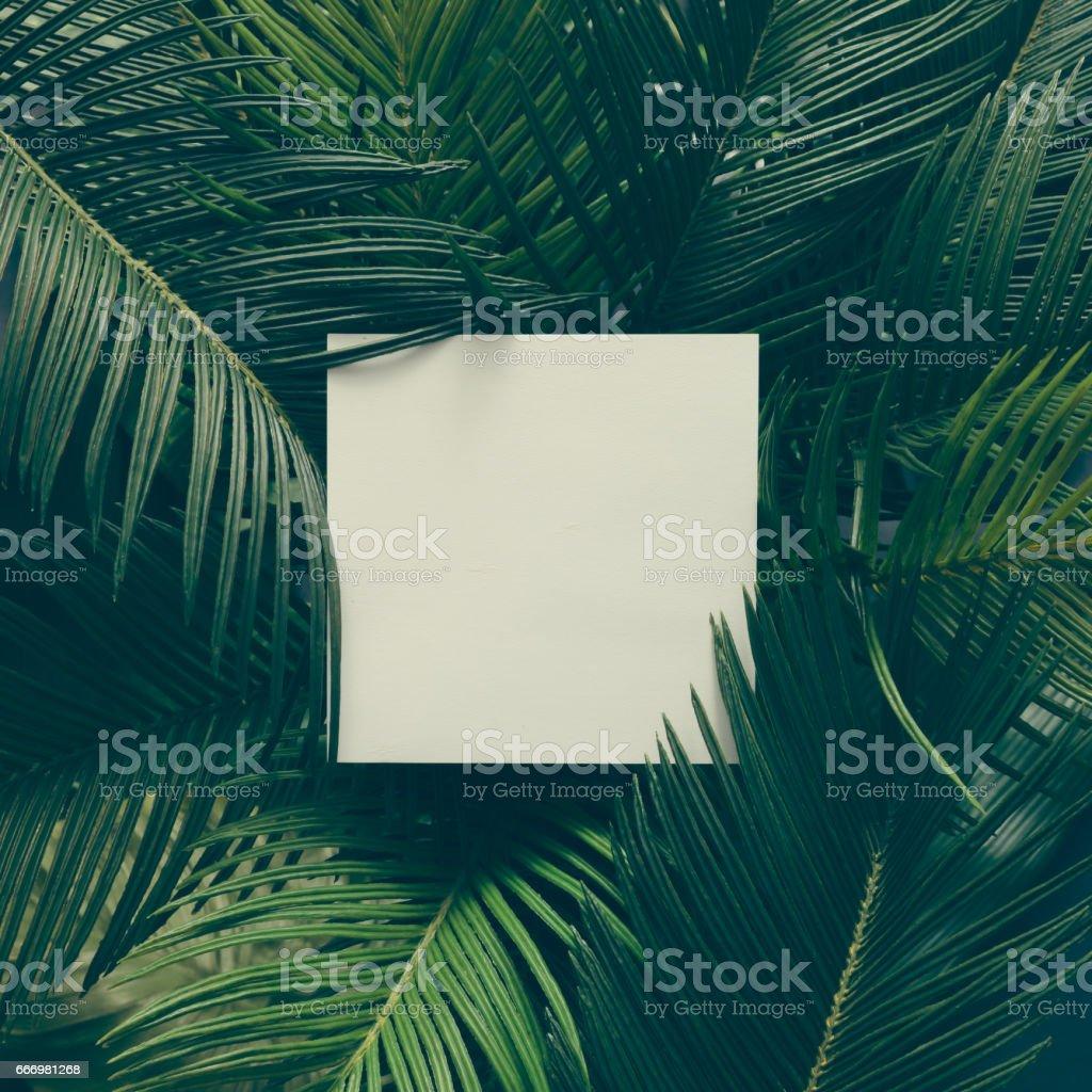 Fotografía de Hojas De Color Verde Tropical Creativo Diseño Con ...