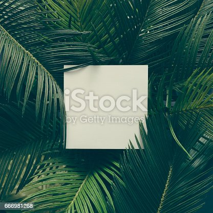 istock Creative tropical green leaves layout with copy space. Nature spring concept. Flat lay. 666981268