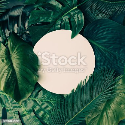 istock Creative tropical green leaves layout with copy space. Nature spring concept. Flat lay. 666983586