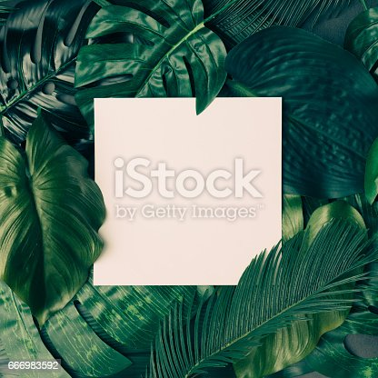 istock Creative tropical green leaves layout with copy space. Nature spring concept. Flat lay. 666983592