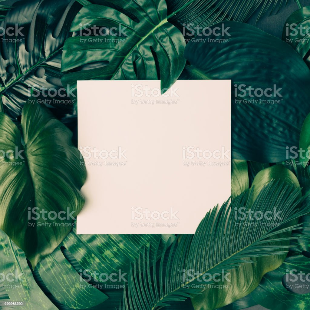 Creative tropical green leaves layout with copy space. Nature spring concept. Flat lay. stock photo