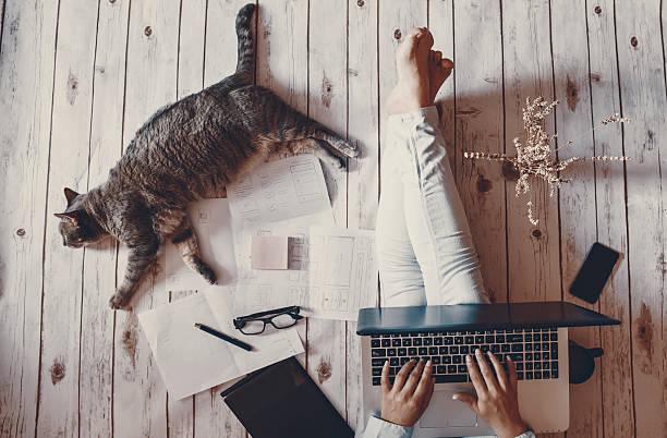 Creative workspace girl working with her cute grey cat picture id625458604?b=1&k=6&m=625458604&s=612x612&w=0&h=g cquyc5hoqucbbjtlkgs1o  zgrnshxsusxsbp9lu8=