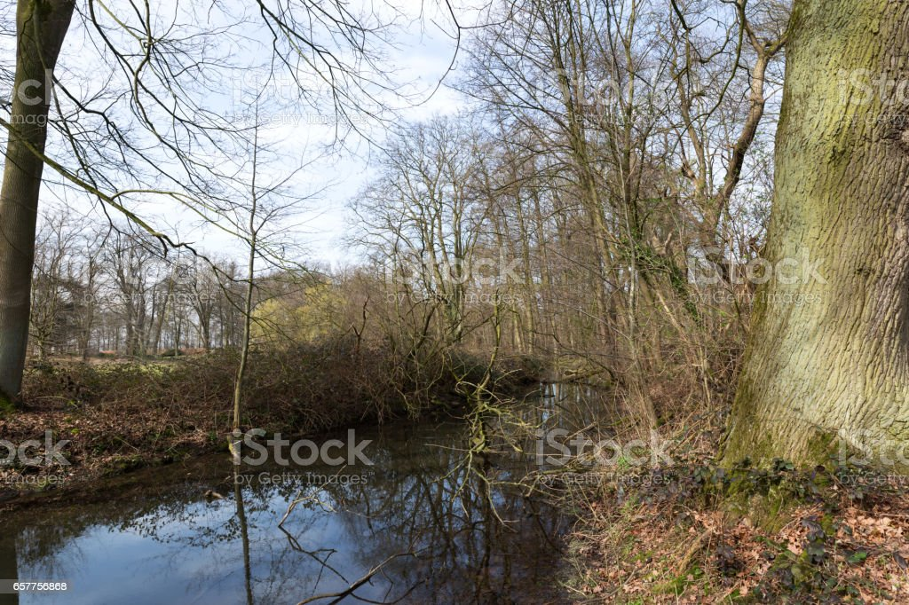 Creek at Nature Reserve / Germany stock photo