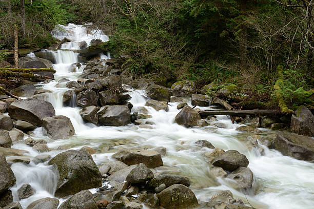 creek at shannon falls provincial park - provincial park stock photos and pictures