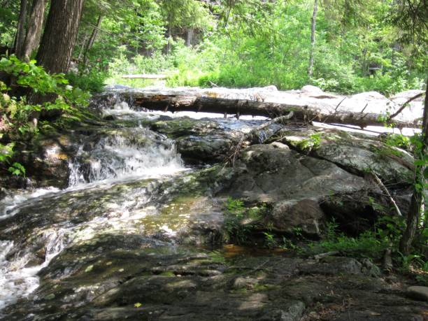 Creek cascading over rocks in forest stock photo